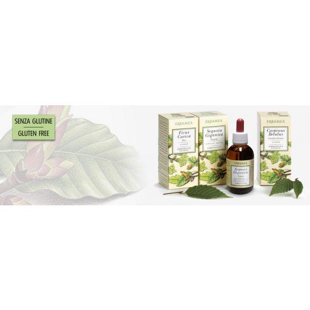 Ribes nigrum Bio (gemmoderivato)