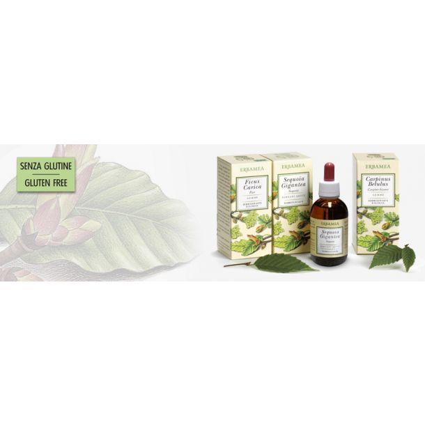 Vitis vinifera (vite) (macerato glicerico)