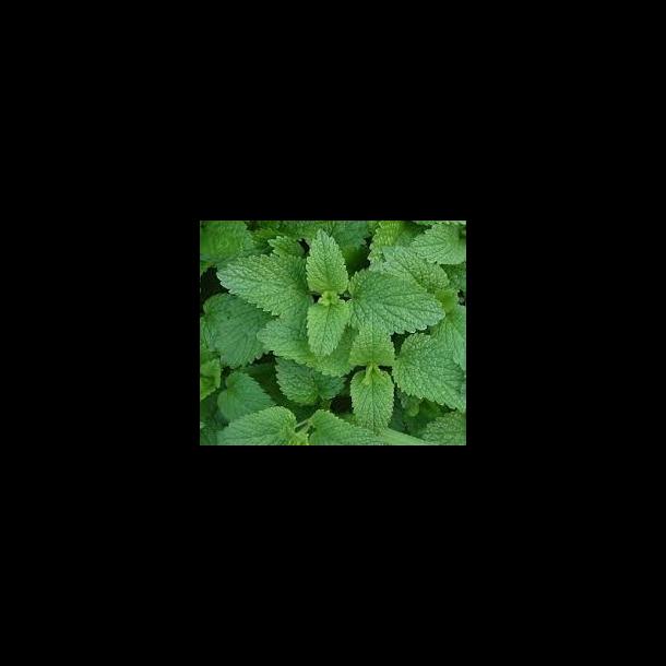 Melissa foglie (100 g)