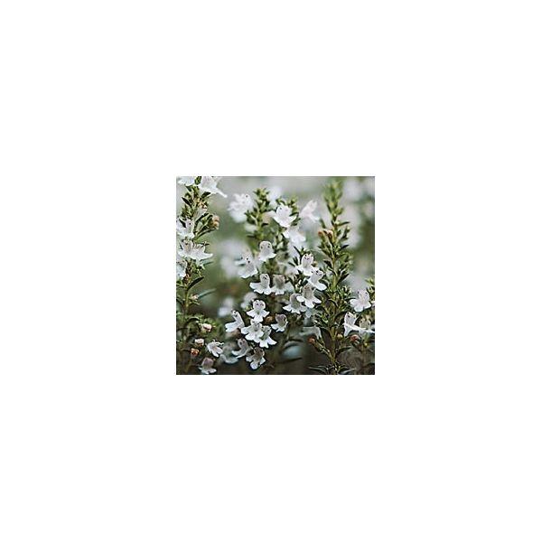 Timo foglie (100 g)